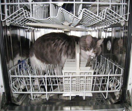 jones-dans-le-lave-vaisselle