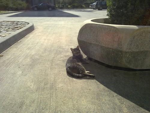 cat_at_cat